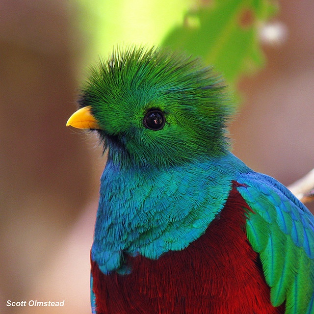 How is it even possible to be this beautiful?: Beautiful Birds, El Quetzal, Animal