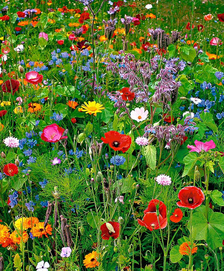 Is het al bijna lente :) Een prachtig boeket groeit zo in het wild. #bloemen #lente nothing prettier than a mini meadow of spring wildflowers!: Field, Beautiful Flower, Wildflowers, Color, Outdoor, Gardens, Flowers Garden, Wild Flowers