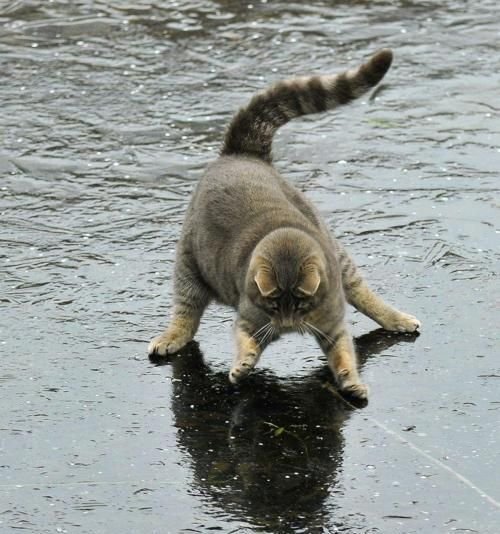 Kitty sees his shadow!: Animals, Kitty Cat, Stuff, Funny Cats, Ice, Humor, Funnies, Funny Animal