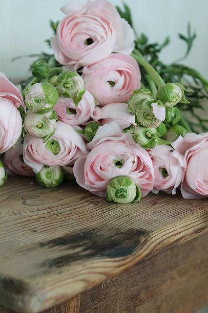 Pink Ranunculus. I had these in my wedding bouquet. my favourite flowers. ❤: Pink Flower, Pale Pink, Friday Link, Bloom, Flowers, Floral, Flower, Favorite Flower