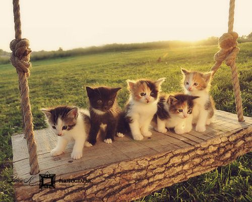 Sunrise Swingers - Cute Kittens :) (reminds me of back when...something me and my sis woulda tried to make our kittens do!): Cats, Animals, Kitty Cat, Sweet, Swings, Pet, Kittens, Kitties
