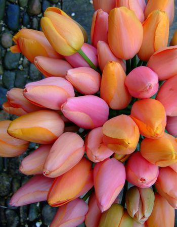 The tulips that grace my garden every spring.: Tulips Garden, Peach Tulips, Pink Tulips