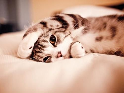 This is how I feel right now.... Blah: Cats, Cuteness, Kitty Cat, Animals, Sweet, Pets, Adorable, Things, Kittens