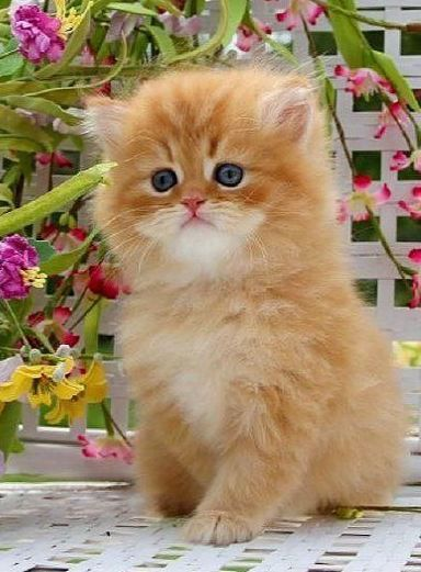 This lovely ginger kitten looks like a cheeky chappie don't you think?: Cats Kediler, December 2014, Cats ️, Cats 4, 5Th December, Cats Photo, Cats Got Me Like, Cute Kittens