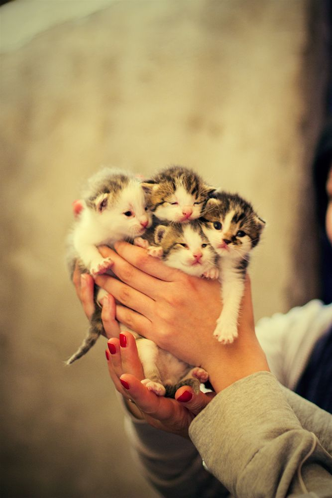 This must be the softest warmest touch/pet hug that anyone could experience! Follow me at http://www.pinterest.com/cattreehouse/: Kitty Cats, Animals, Cuteness, Baby Kittens, Crazy Cat, Hands Full, Cat Lady