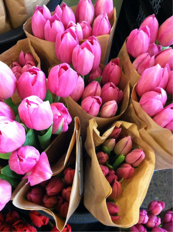 tulips: Pink Flower, Favorite Flowers, Flora, Beautiful, Flower Power, Bloom, Spring, Floral, Pink Tulips