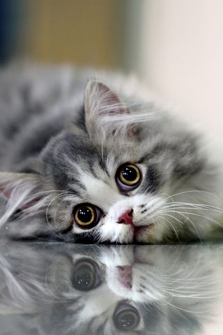 How can you not love a face like that?: Kitty Cats, Face, Reflection, Animals, Sweet, Pet, Kitty Kitty, Kittens, Eye