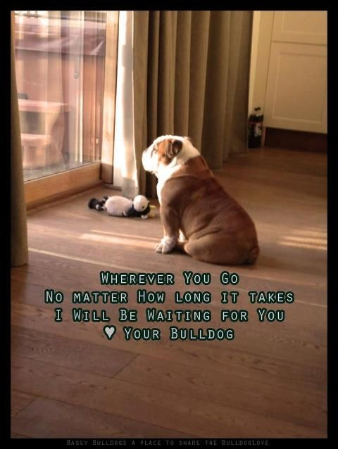 .... And give you a wiggle butt when you get home!!: Bulldog S, Animals, English Bulldogs, Friend, Bullies, Bull Dogs