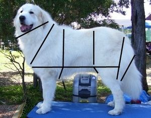 Espinay - Grooming Your Great Pyrenees: Doggie, Great Pyrenees Puppies, Great Pyrenees Grooming, Perfect Pyrenees, Pet, Great Pyranees, Puppies Great Pyrenees, Great Pyrenees Puppy, Great Pyrenees Dog