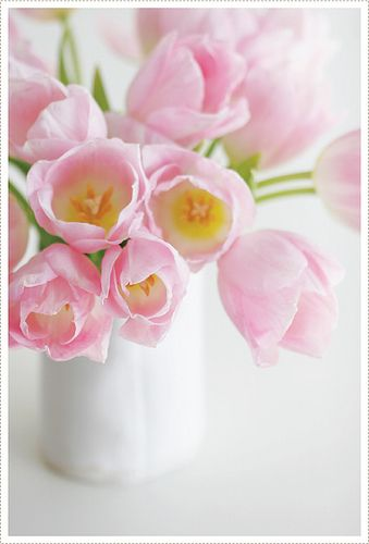 https://flic.kr/p/7zVMZ4 | Tulips | I rescued these tulips from a bin with no water in it at Trader Joe's...they have perked up and inspired me.: Color, Beautiful Flowers, Pretty Flowers, Spring, Photo, Garden, Pink Tulips, Flower, Favorite Flower