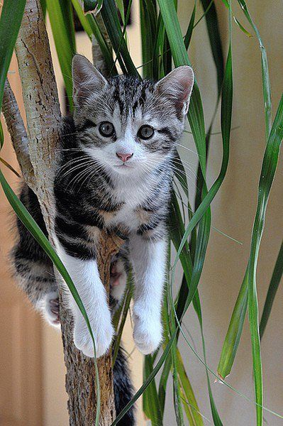 Just hanging around :D | See More Pictures: Cats, Animals, Kitty Cat, Tree, Pet, Kitty Kitty, Kittens, Kitties, I M Stuck