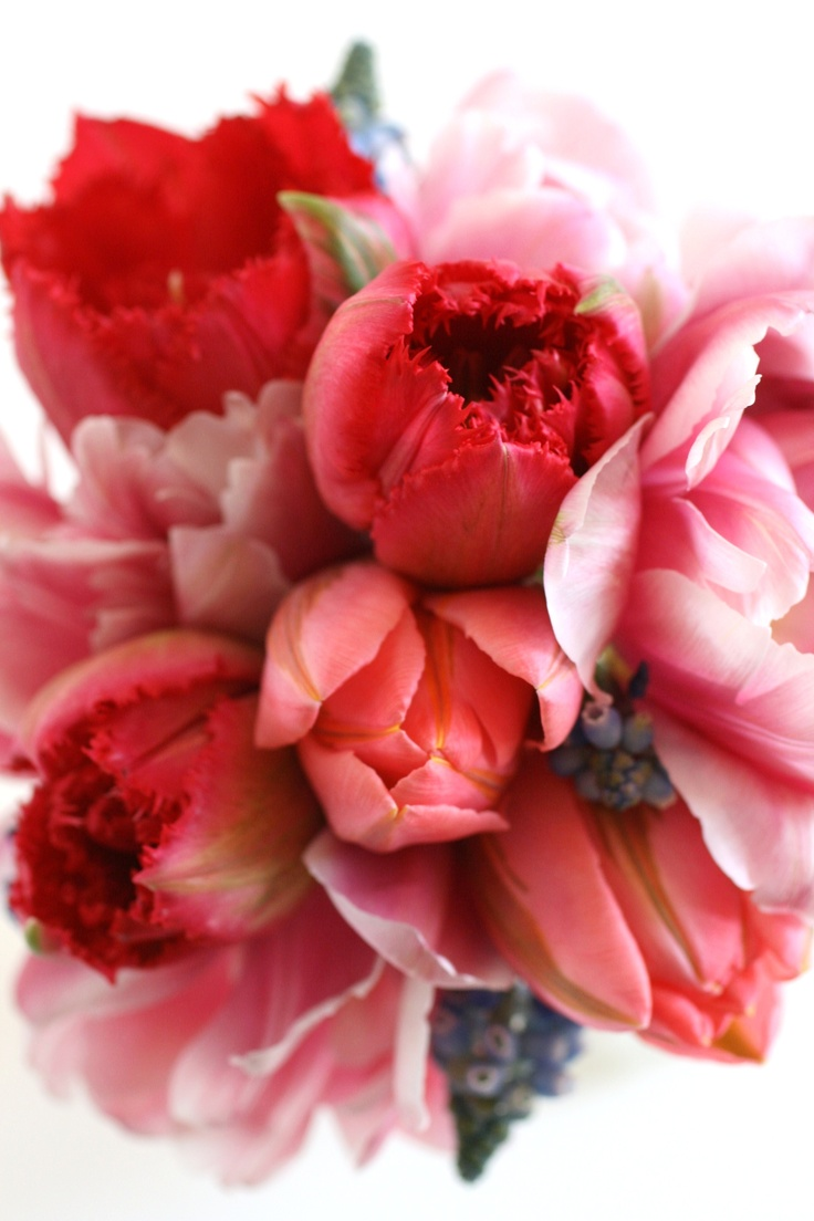 Tulips: Color, Flower Power, Beautiful Flowers, Bloom, Pink, Red Tulips, Flowers, Garden