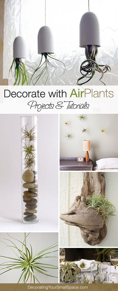 Creative Ways to Decorate with Air Plants! • Lots of Projects & Tutorials!: Centerpiece, Airplants, Idea, Air Plants, Air Plant Display, Terrarium, Garden, Tillandsia, Indoor Plants