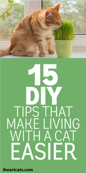 15 DIY Tips That Make Living With A Cat Easier: Cat Tips Diy, Pets Diy Cats, Cat Care Tip, Cats Stuff Diy, Cat Ideas Diy, Cats And Kittens Diy, Living With Cat