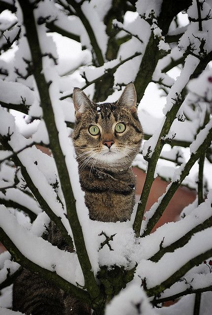 """""""Don't Take My Picture Through the Window. LET ME IN THE HOUSE!"""": Cats Cats, Kitty Cat, Tabby Cat, Winter Wonderland, Snow Cat, Kitty Kitty, Cats Kittens"""