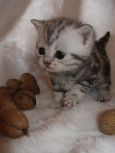 Cuuute<3: Kitty Cat, Cute Kitten, So Cute, Baby Animal, Baby Kitty, Adorable Animal, Baby Cat, Big Head