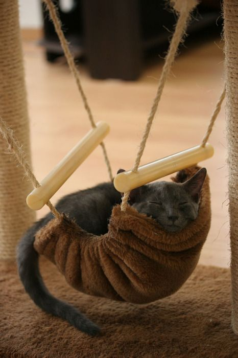 Kitty Hammock.  -    How cute!  I would need a little swing-set with three...and Diva/Queen cat would be in the middle where she would think shes special, but really it would be just to keep Emo/Assassin cat from eating my Schnauzer, who would be on the: