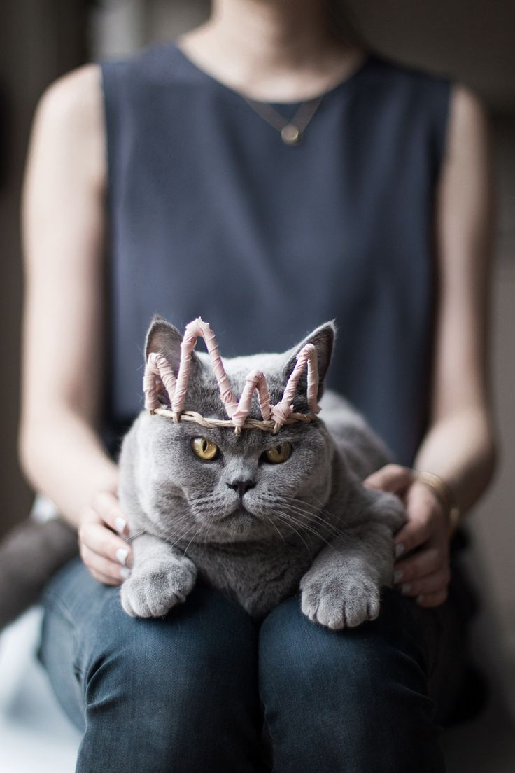 Maddy with her Birthday Crown.  Her clumsiness and easy going nature brings so much joy to our lives.  Happy 1st Birthday, my baby girl! We love you dearly X: Grey Cat, Kitty Cats, King Kitty, Birthday Cat, Queen Kitty, Cat Lady