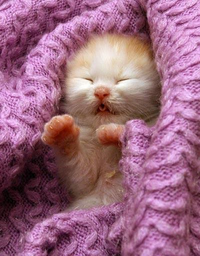 Oh my goodness... you are so cute.: Kitty Cats, Sweet, Baby Kittens, Kitty Kitty, Box, Baby Animals, Cat S, Baby Kitty