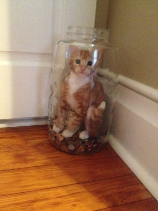 This cat who was trying to steal money and got caught:: Lol Cat, Kitty Cat, Funny Cat, Cat And Kitten, Crazy Cat, Funny Pet, Cats Kittens, Life Choice