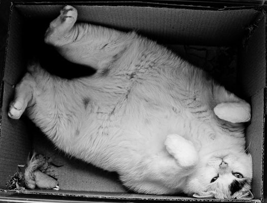 "what do you mean,""you are too big for that box now""!?!? I fit PERFECTLY!!!: Kitty Cats, Big Cats, Cat Squished, Cat Boxes, Crazy Cat, Fat Cats, Kitty Belly, Cat Lady"