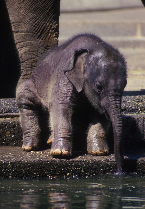 baby animals | Tumblr...........click here to find out more http://googydog.com