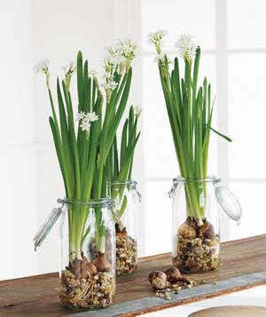 How to force flower bulbs to bloom...great way to bring some cheer inside during the long winter months.