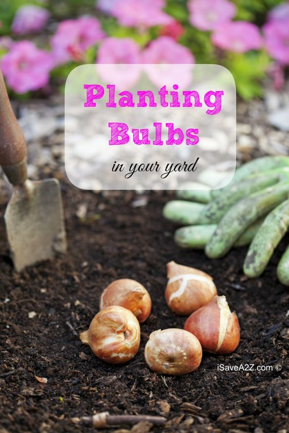 Planting Blubs in your Yard - Tips and Tricks!