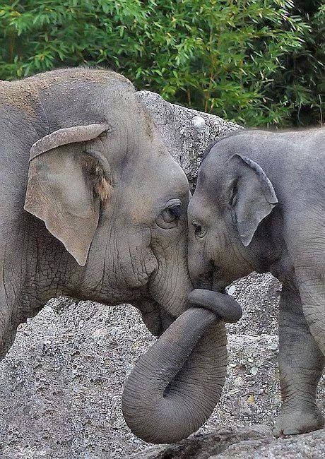 This is one of the many reasons I love elephants! Look at the emotion in those sweet faces.
