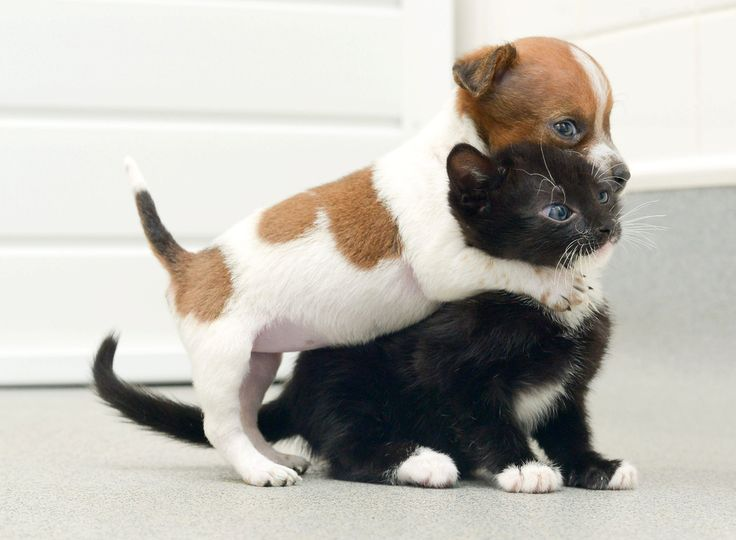 A Rejected Puppy And An Abandoned Kitten Adopt Each Other. Buttons the puppy was the runt of the litter and was rejected by her mother, but at Battersea Cats and Dogs Home, he found someone who loves him unconditionally: Kitty the kitten. The two were pla