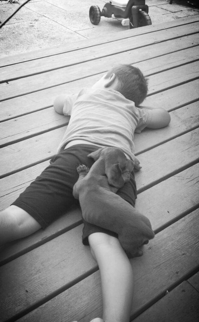 Hey, this looks like a comfortable  place to nap!: Dachshund Love, Dachshund Puppies, Dachshund, Pet, Dachshund Dog Doxie, Doxies, Dachshund Clube, Animal
