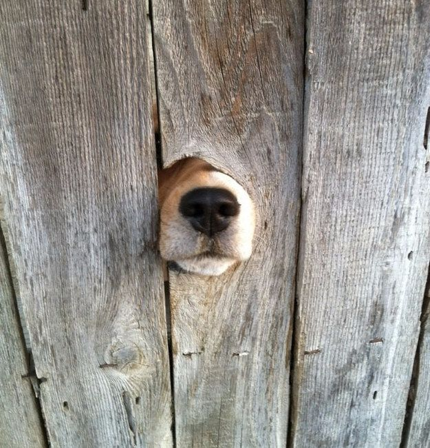 """I can't see you but I still wanted to give you a little hello!!"" 