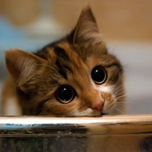 Now... take a peek at this adorable cat with pouty eyes. (She wants some of your love.): Kitty Cats, Big Eyes, Adorable Cat, Cute Cat, Kitty Kitty, Cat S, Adorable Animal, Cat Lady