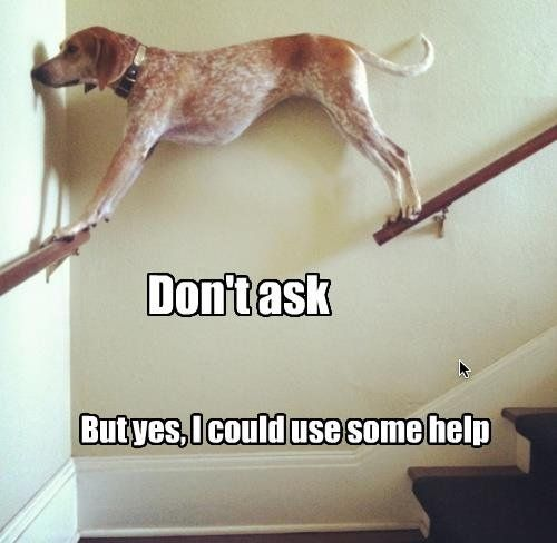 Picture this as me with one foot on on a ladder, one foot on a shelf, and my shirt caught on a bolt higher up the ladder... And that's an average day at work.: Funny Animals, Giggle, Funny Dogs, Funny Picture, Funny Stuff, So Funny