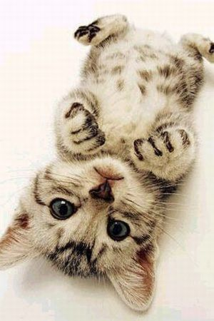 Pictures of baby animals get me through every single day.: Kitty Cat, Cute Kitten, Cute Cat, Baby Animal, Adorable Animal, Kittycat, Baby Cat