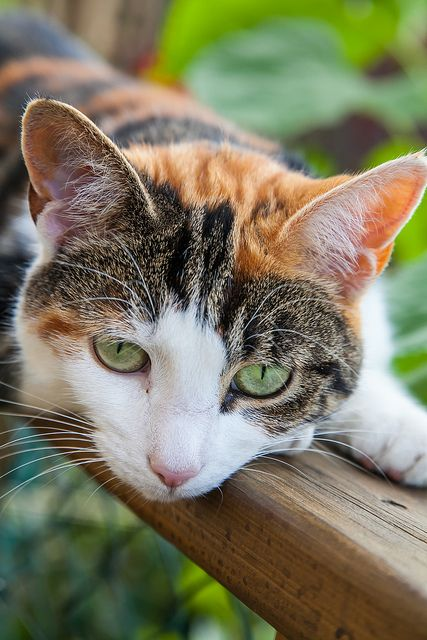Stripepaw,tom,apprentice, mentor is Hollystorm, brave, handsome, has a lot of friends, popular among young warriors.me.No interest in anyone yet.: Cats Cats, Cats Meow, Pretty Colors, Pretty Girl, Gatos Cats, Amazingly Pretty, Pretty Cats, Cats Kittens