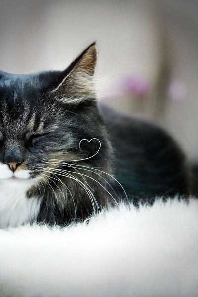 Those Amazing Cats #cats, #pets, #animals, https://facebook.com/apps/application.php?id=106186096099420: Kitty Cat, Cat Whiskers, Shaped Whisker, Crazy Cat, Kitty Kitty, Heart Whisker, Cat Lady, Kittycat