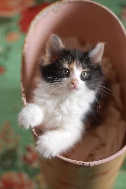 Why did you put me in the waste paper bin? Don't you want me any more?: Cats Meow, Kitty Cats, Cute Cats, Gatos Cats, Calico Cats, Cats And Kittens, Kittens Cats, Cats Kittens, Baby Cat