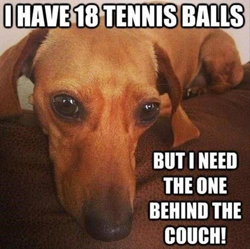 why dog why? my dog does this to me all the time. And every time I help her get it. lol who's laughing now...: Funny Animals, Dachshund, Pet, Doxie, Funny Picture, So True, Tennis Balls