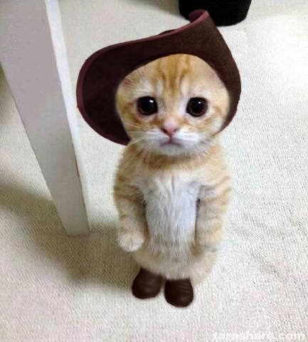 Yes, you can have whatever your heart desires.  You want a dead mouse and bird blood?  Okaaay.: Funny Animals, Kitty Cat, So Cute, Pet, Cute Cat, Cute Animals, Adorable Animal