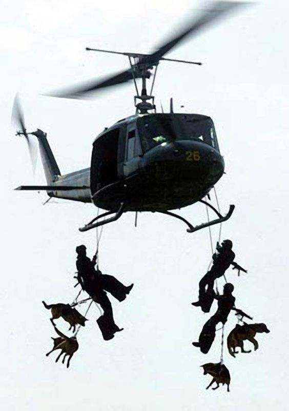 Military Dogs and Their Soldiers ... This is One Hell of a Photo! WOW WOW
