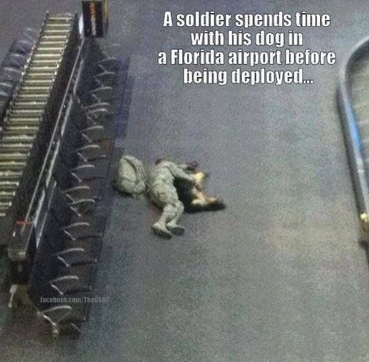 SOMEONE SAID THIS WAS SWEET---IT'S NOT SWEET IT IS AT LEAST POIGNANT IF NOT DOWNRIGHT SAD.: Animals, Dogs, Sweet, Soldiers, Heart, Hero, Friend, Military