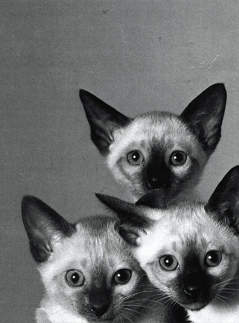 """""""Once upon a time, there were 3 little kittens named Mittens, Tom Kitten and Moppet.  They each had dear little fur coats of their own, and tumbled by the doorstep and played in the dust."""" --Beatrix Potter (""""The Tale of Tom Kitten""""): Cats"""
