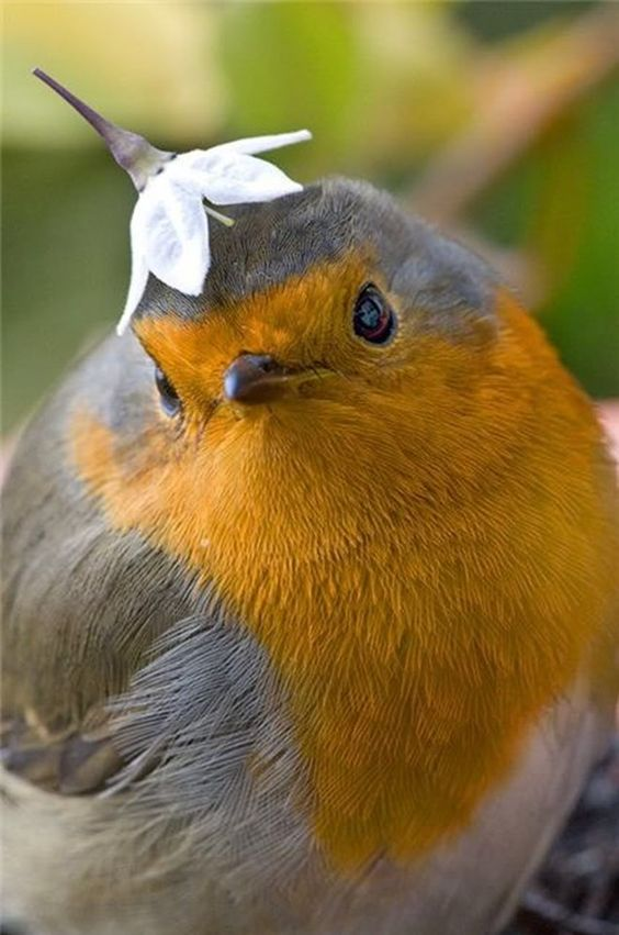 Awesome #cute bird wearing a flower hat.  Just looking at this makes me happy...