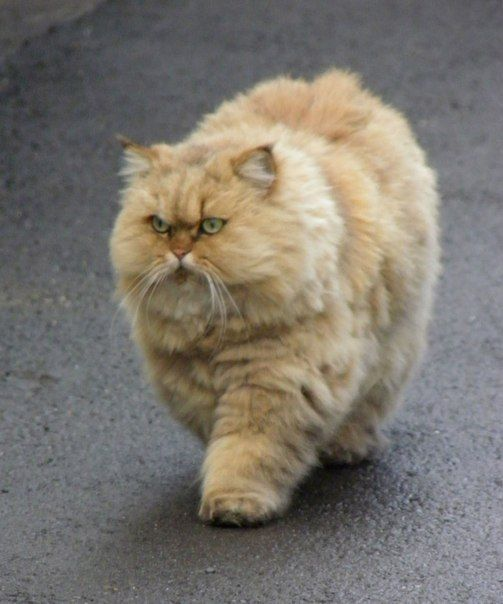 """""""Not in the mood for your 'picture taker'.... Out my way...."""" ("""""""") ("""""""")"""
