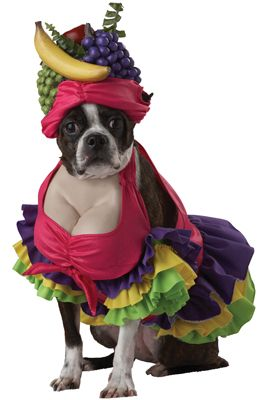 # Cha Cha Cha! Dog Costume - Pure Costumes  I just died picturing Darla in this @Brittany Trani: Halloween Costumes For Dogs, Dogs In Costume, Dogs In Halloween Costumes, Dog Costumes, Of The, Pet Costumes, Boston Terriers, Funny Dog Halloween Costumes