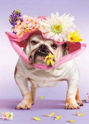 I've got my bonnet on and I'm ready for the parade.........: Funny Dogs, Animals Dogs, English Bulldogs, Funny Cards, Bulldogs Pets, Holiday Bulldogs, Happy Easter