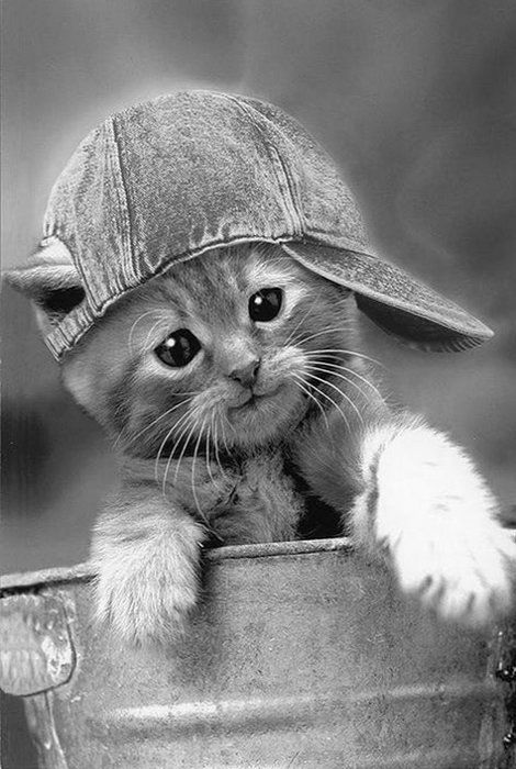 Precious little kitten. Usually don't care for staged photos...but loved this face! <pin by Nancy Kast on animals>: Cats Cats, Kitty Cats, Baseball Cap, Pet, What S, Kitty Kitty, Cat S, Cats Kittens, Cute Kittens