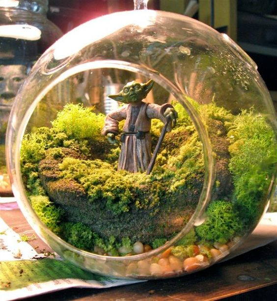 Terrariums have been used to house plants for years, but these glass containers can be used in a variety of different ways and for a variety of different plants. Get creative with it