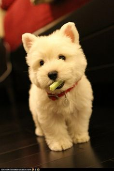 Fluffy white dog dear jesus youre beautiful